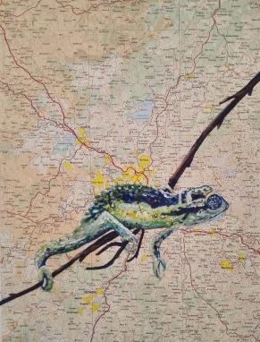 Natal Midlands Dwarf Chameleon (2016)